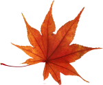 autumn_leaves_PNG3582