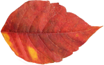 autumn_leaves_PNG3610
